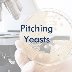 Pitching Yeasts
